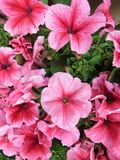 Bei fiori dei colori intensi e di grande bellezza fotografie stock libere da diritti