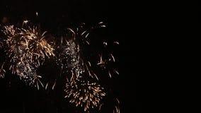 Bei fiori dei fuochi d'artificio sul cielo notturno I fuochi d'artificio blu sul nero scuro colorano brillantemente il fondo La f video d archivio