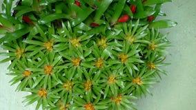 Bei fiori dei Paesi Bassi in primavera immagine stock