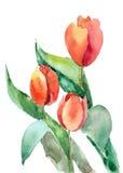 Bei fiori dei tulipani Immagine Stock Libera da Diritti