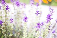 Bei fiori del giardino Immagine Stock Libera da Diritti