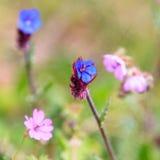 Bei fiori del giardino Fotografia Stock