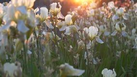Bei fiori del giardino in un letto di fiore al sole video d archivio