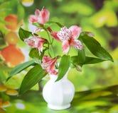 Bei fiori del giglio di alstroemeria in vaso bianco Fotografia Stock
