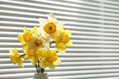 Bei fiori del narciso in vaso vicino alla finestra con i ciechi immagini stock libere da diritti