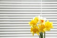 Bei fiori del narciso vicino alla finestra con i ciechi fotografia stock
