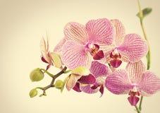 Bei fiori del orhid Immagine Stock Libera da Diritti