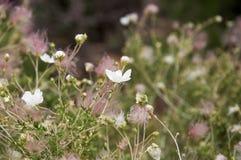 Bei fiori del prato Fotografia Stock