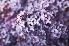 Bei fiori del primo piano Fotografie Stock
