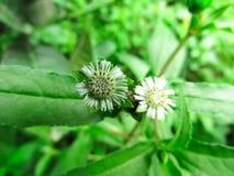 Bei fiori dell'erba Erba di colore verde fotografia stock