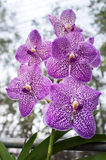 Bei fiori dell'orchidea Immagini Stock Libere da Diritti