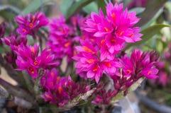 Bei fiori dell'orchidea Fotografia Stock