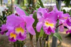 Bei fiori dell'orchidea Fotografie Stock