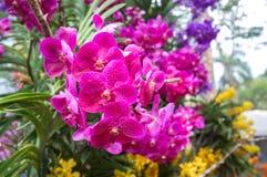 Bei fiori dell'orchidea Immagini Stock