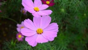 Bei fiori dell'universo nel parco stock footage