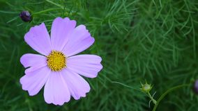 Bei fiori dell'universo sull'aiola Fine in su video d archivio