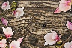 Bei fiori della magnolia Fotografie Stock Libere da Diritti