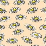 Bei fiori della margherita bianca su fondo rosa Reticolo senza giunte Immagine Stock
