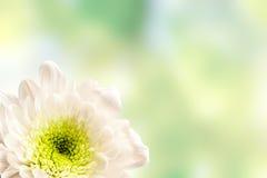 Bei fiori della molla fotografia stock