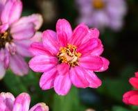 Bei fiori della molla Immagini Stock