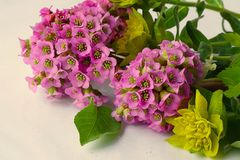 Bei fiori della molla su bianco immagini stock