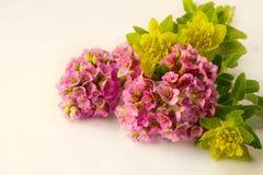 Bei fiori della molla su bianco fotografie stock