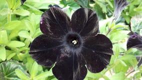 Bei fiori della petunia al giorno soleggiato fotografia stock