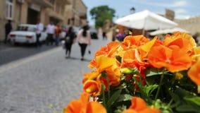 Bei fiori della petunia arancio in fiore-letto sulla via di Bacu, Azerbaigian video d archivio