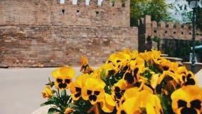 Bei fiori della petunia arancio in fiore-letto sulla via di Bacu, Azerbaigian archivi video