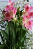 Bei fiori della PIANTA di ALSTROEMERIA del giglio peruviano Immagini Stock