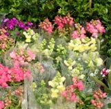 Bei fiori della primavera in domenica Fotografia Stock Libera da Diritti