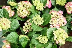 Bei fiori della primavera in domenica Fotografie Stock Libere da Diritti