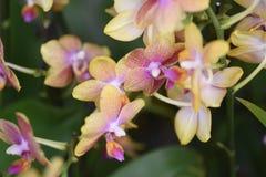 Bei fiori della primavera in domenica Fotografia Stock