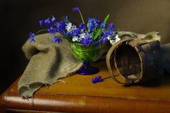 Bei fiori della primavera isolati su fondo marrone immagini stock libere da diritti