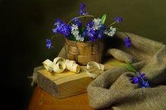 Bei fiori della primavera isolati su fondo marrone fotografie stock
