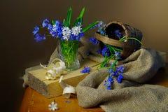 Bei fiori della primavera isolati su fondo marrone fotografia stock libera da diritti