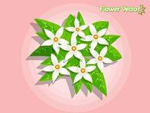 Bei fiori della primavera sul fondo di colore Estate e decorat Fotografia Stock Libera da Diritti