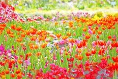 Bei fiori della sorgente Fotografie Stock