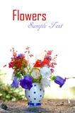 Bei fiori della sorgente Fotografie Stock Libere da Diritti