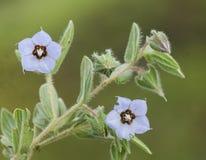 Bei fiori della sorgente Immagine Stock Libera da Diritti