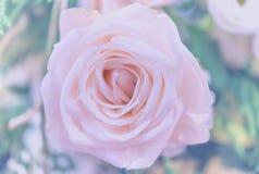 Bei fiori delle rose Fotografia Stock Libera da Diritti
