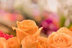 Bei fiori delle rose Fotografie Stock Libere da Diritti