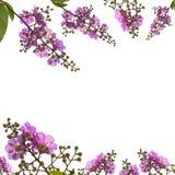 Bei fiori dentellare Fotografia Stock
