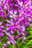 Bei fiori dentellare dell'orchidea immagine stock libera da diritti