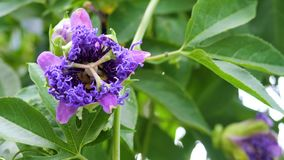 Bei fiori dentellare nel giardino stock footage