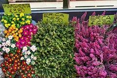 Bei fiori in deposito con i prezzi da pagare Fotografie Stock Libere da Diritti