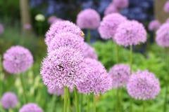 Bei fiori di fioritura della sorgente Fotografia Stock