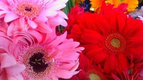 Bei fiori di fioritura di rosso e di rosa Fotografia Stock