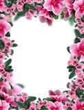 bei fiori di rosa Fotografie Stock