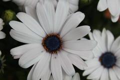 Bei fiori di un colore incredibile e di un odore speciale fotografia stock libera da diritti